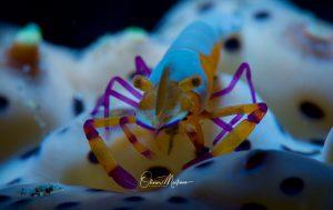 Sejour Plongée Philippines Anilao Paradis de la Macro Asiaqua
