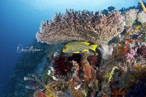 Komodo-parc-national-indonesie-martinoo-corail-gaterin-asiaqua.jpg