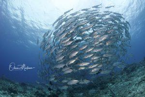 Tubbbataha-Reef-Philippines-Martinoo-carangue-asiaqua.jpg