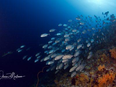 Asiaqua - Seadoors Liveaboard