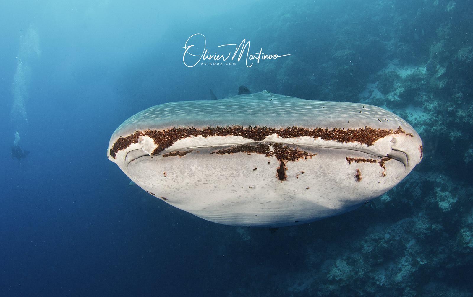 Tubbataha Reef Asiaqua Mai 2020