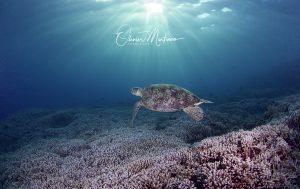 Tubbataha Reef Asiaqua Tortue Sky © Martino