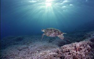 Tubbataha Reef Asiaqua Tortue Sky © Martinoo