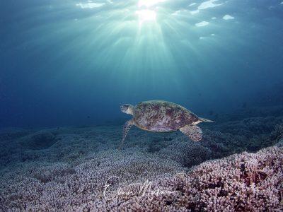 Asiaqua - XXS au XXL Planet Dive & Seadoors Mai 2020